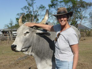 Henderson Brahman grey and Jenn